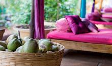 Purple Valley Goa - Retreat with Joey Miles