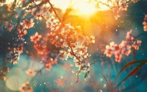 sun shining through pink blossoms with blue background