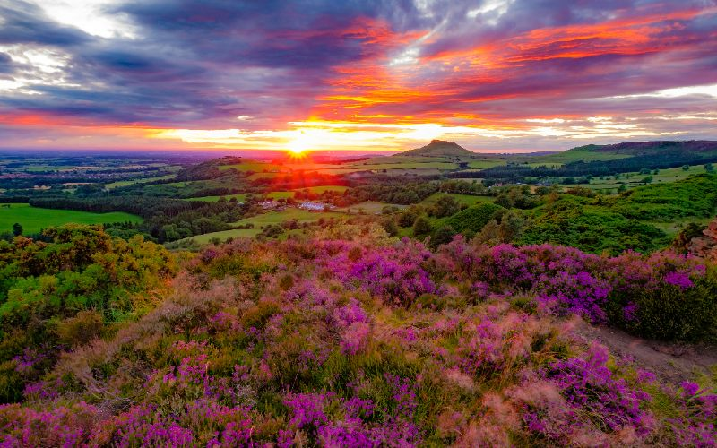 view of sunrise/sunset over purple heather moors in North Yorkshire